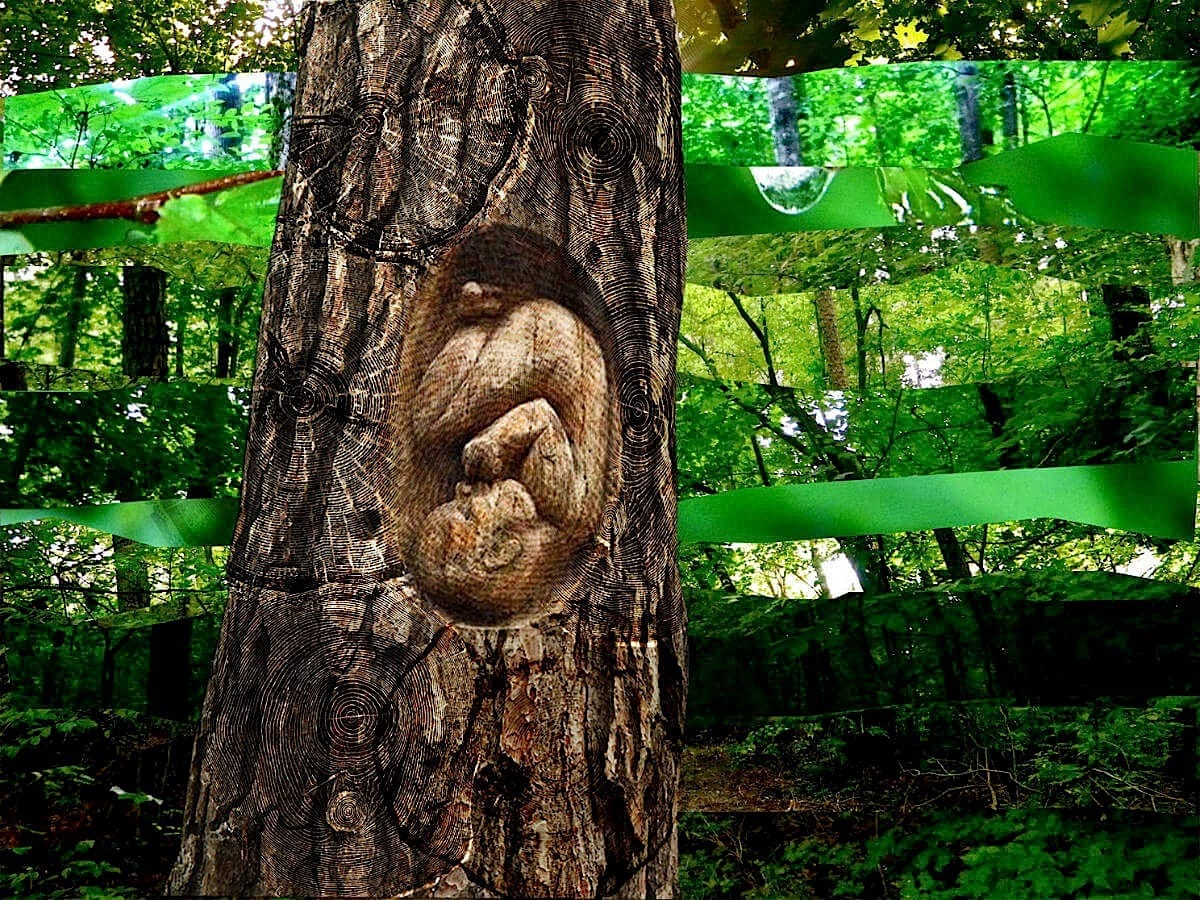 In Mother Nature's Womb- Sustainability Gallery