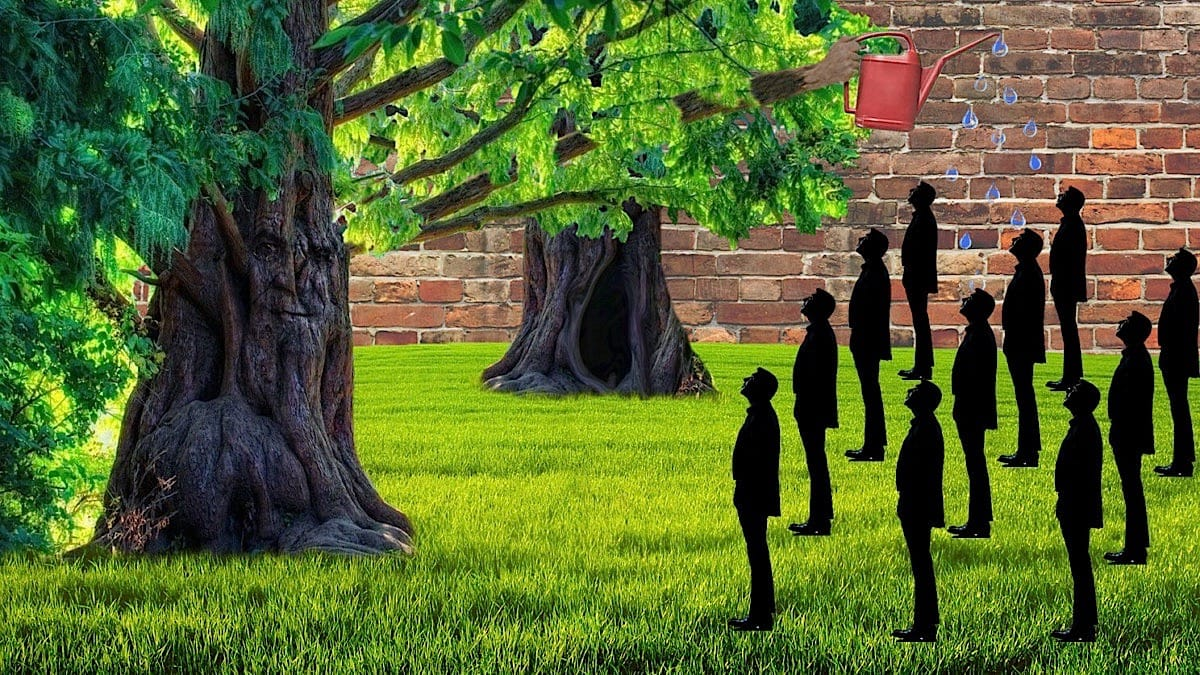 Trees Watering People- Sustainability Gallery